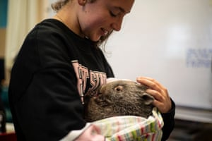 Lara Hunt looks after a rescued baby wombat.