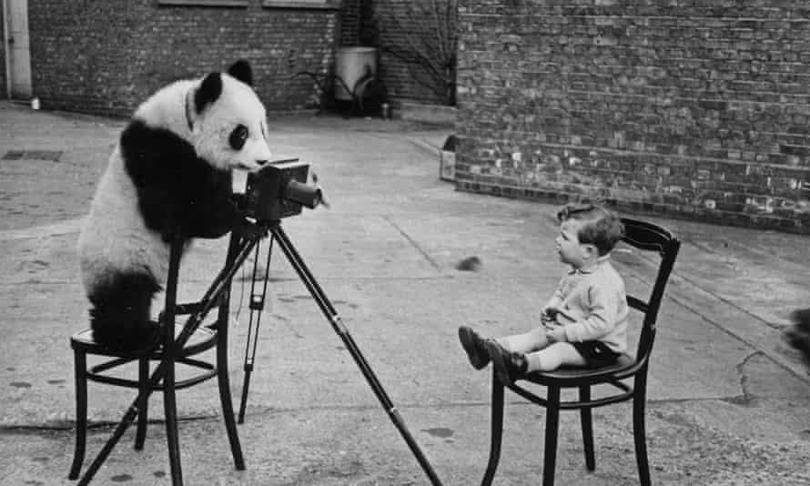Ming the panda