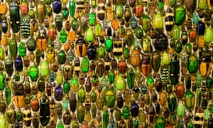 A colourful collection of beetles in Montreal's Insectarium