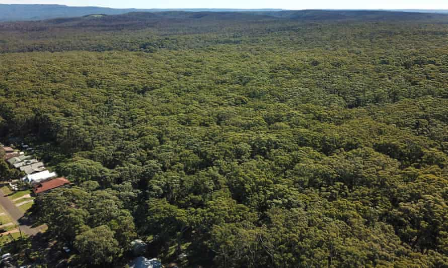 An aerial view of the unburnt area of bushland due to be cleared for a new housing development in Manyana on the NSW south coast