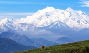 Denali – the tallest mountain in North America – rises in the distance behind a caribou.