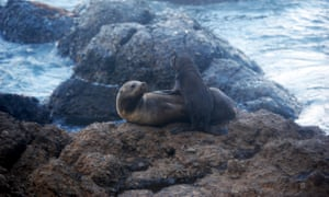 A fur seal and pup.