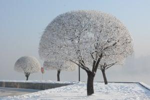 Jilin, China: Soft rime on trees