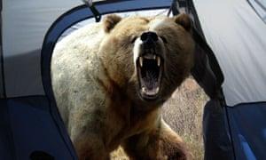 Stephen Harrison's bear attack hoax image.
