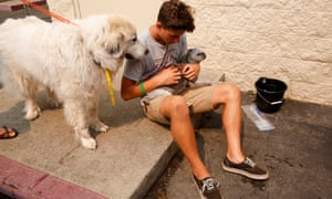 Volunteer Max Hamilton, of Redding, sits with rescued dogs.