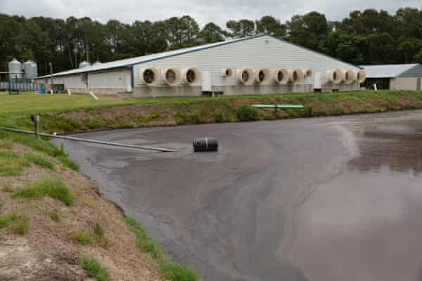 A lagoon of pig waste