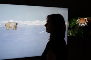 Digital artist Kelly Richardson at the hyper-real 'Closer to Nature' exhibition in London, which puts the public face-to-face with the world's most endangered animals to launch 'Love Nature', a new wildlife on-demand digital channel.