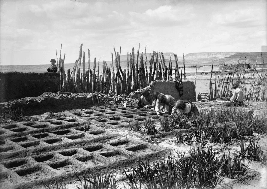 Yağmur suyu ve akış ... New Mexico'daki Zuni Pueblo'daki waffle bahçeleri, 1910-25.