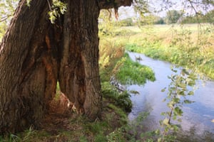 A willow by the Gwash river has a split in the base big enough to squeeze through