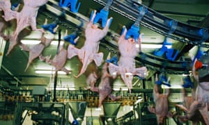 A chicken processing factory.