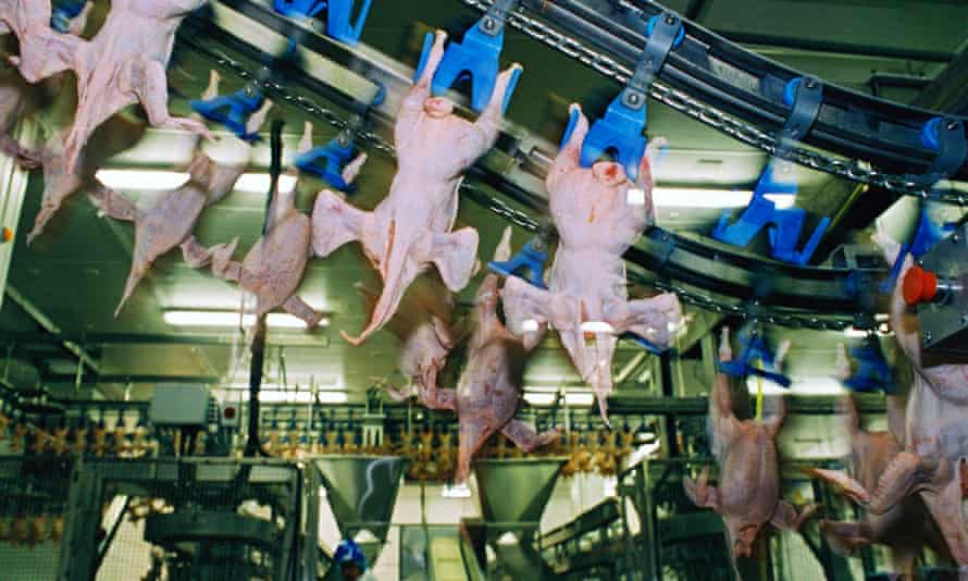 Chicken processing factory, UK