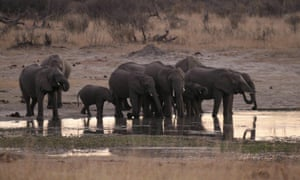 A herd of elephants gather at a water hole in Zimbabwe's Hwange national park.