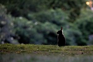 A rabbit in Tiergarten Park in Berlin, Germany