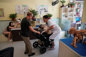 Jin Rishan, a specialist at the Shanghai TCM Neurology and Acupuncture Animal Health Centre, helps an owner put his dog in to a pram after treatment