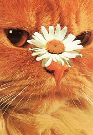 A collage of a ginger cat with a daisy on its nose by Stephen Eichhorn