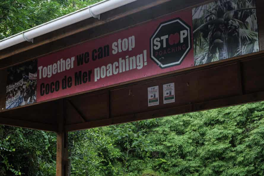 A picture shows a billboard reading: 'Together we can stop coco de mer poaching' near a coco de mer palm on Praslin Island. The fruit only grows wild on the Praslin and Curieuse islands in Seychelles.