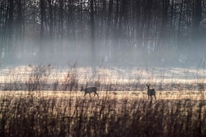 Doe are pictured at sunrise in Tyniec, south Poland.