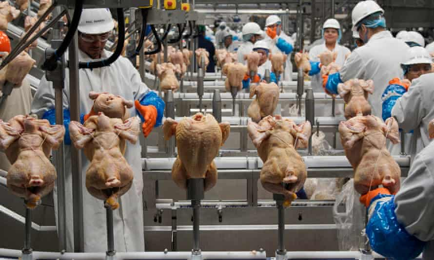 Workers process chickens at a plant in Fremont, US