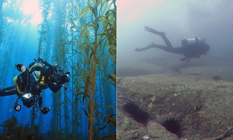 The dead sea: Tasmania's underwater forests disappearing in our lifetime