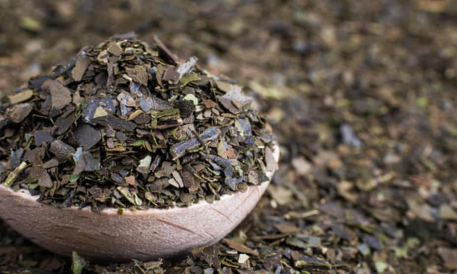 Ayahuasca Guayusa dry tea leaves in wooden spoon