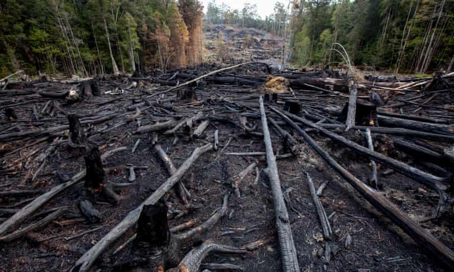 Forestry in Tasmania