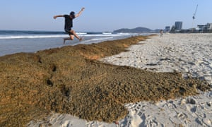 Piles of cornflake seaweed at Palm Beach on Queensland's Gold Coast