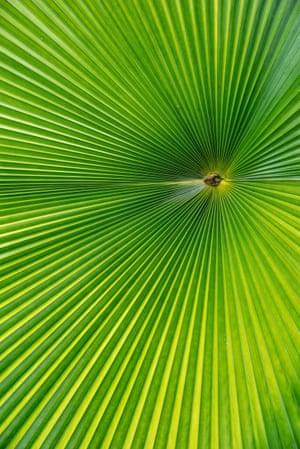 Eye of the Leaf