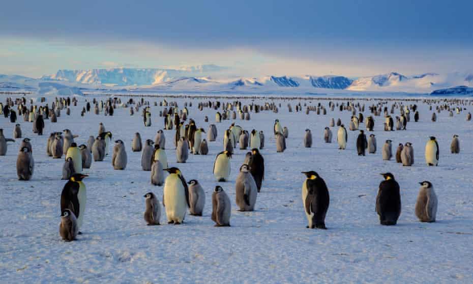 An emperor penguin colony on the frozen Ross Sea, Cape Washington, Antarctica