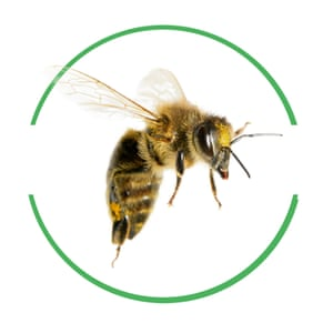 Bee cut-out inside green-rimmed circle