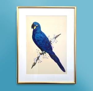 Fran Giffard - Leah's Macaw