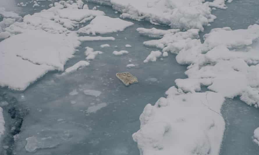 Blocks of polystyrene were sitting on top of ice