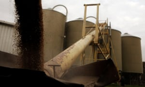 Silos are loaded with barley in a farm near Gunnedah