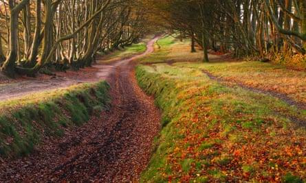 Beech hedgebanks along the summit ridge of the Quantock Hills, Somerset