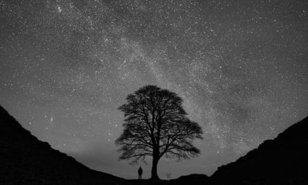Person standing under tree looking at stars