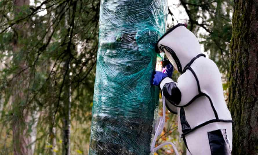 Chris Looney fills a tree cavity with carbon dioxide after vacuuming a nest of Asian giant hornets from inside it, on 24 October in Blaine, Washington.