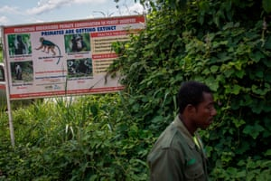 A forest warden walks in front of a billboard that promotes the conservation of primates in forest reserves in Ghana. Campaigners want authorities to abandon plans to mine bauxite in the Atewa Range Forest Reserve, in the country's Eastern Region, arguing it will destroy the habitat of rare plants and animals.