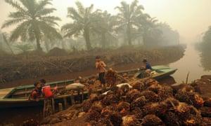 Unloading palm oil fruit in Sumatra.