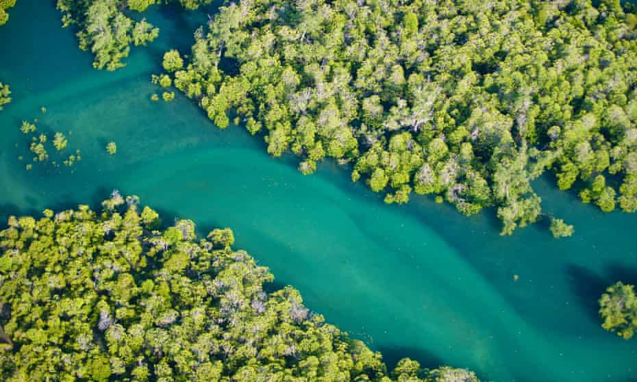 An aerial image of mangroves in Morondava, west Madagascar.