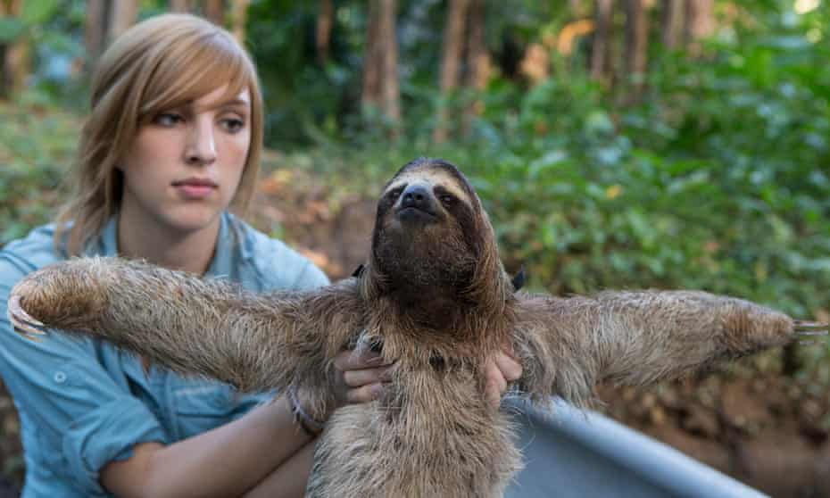The Sloth Conservation Foundation's Becky Cliffe, and brown-throated sloth