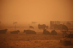An orange smoke-filled sky is seen above cows in Molalla, Oregon, on 10 September as fires burn nearby.