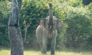 Elephant at Gal Oya national park