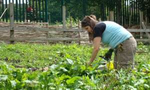 A young woman tends to vegetables growing in an outdoor plot