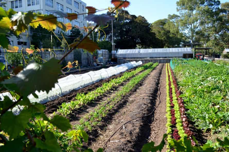 The urban community farm at Camperdown.