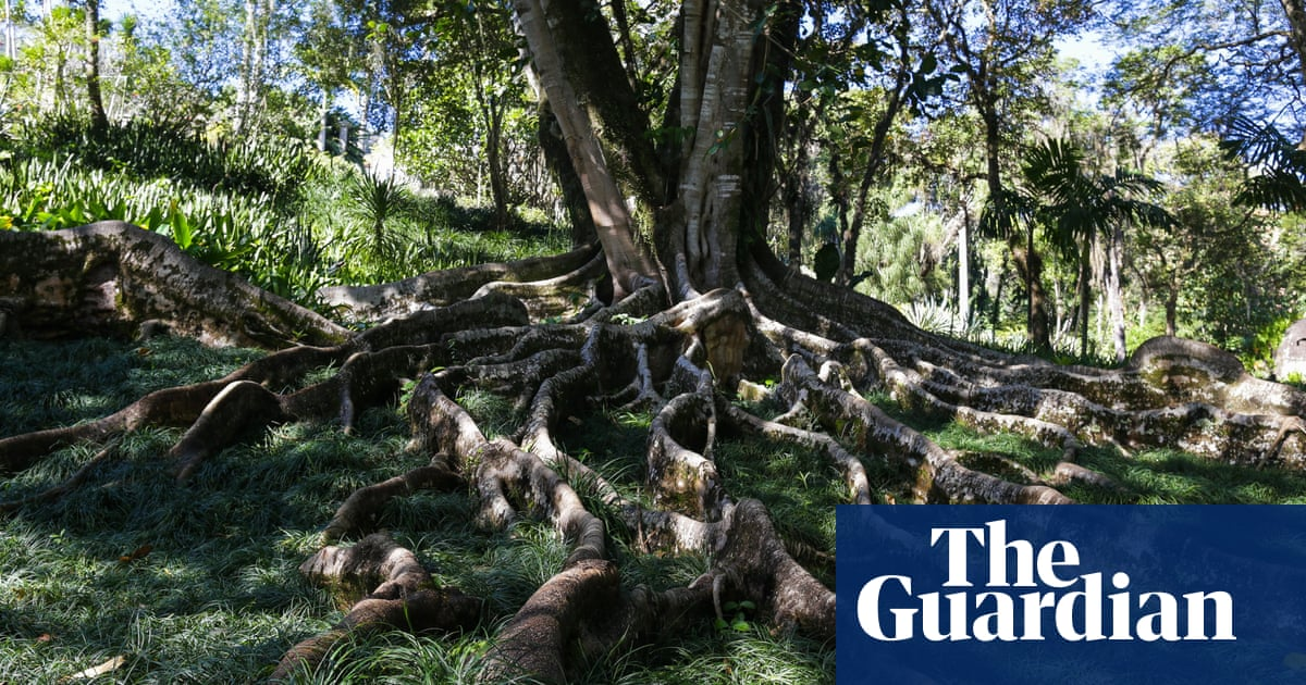 Can we really solve the climate crisis by planting trees? (part two) – podcast