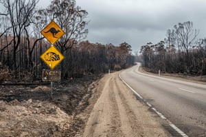 Burnt wildlife signs on the Bruthen-Buchan Road, an area burnt during the November and December fires.