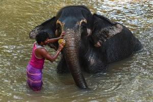 Pinnawala, Sri Lanka A mahout washes an elephant in the river