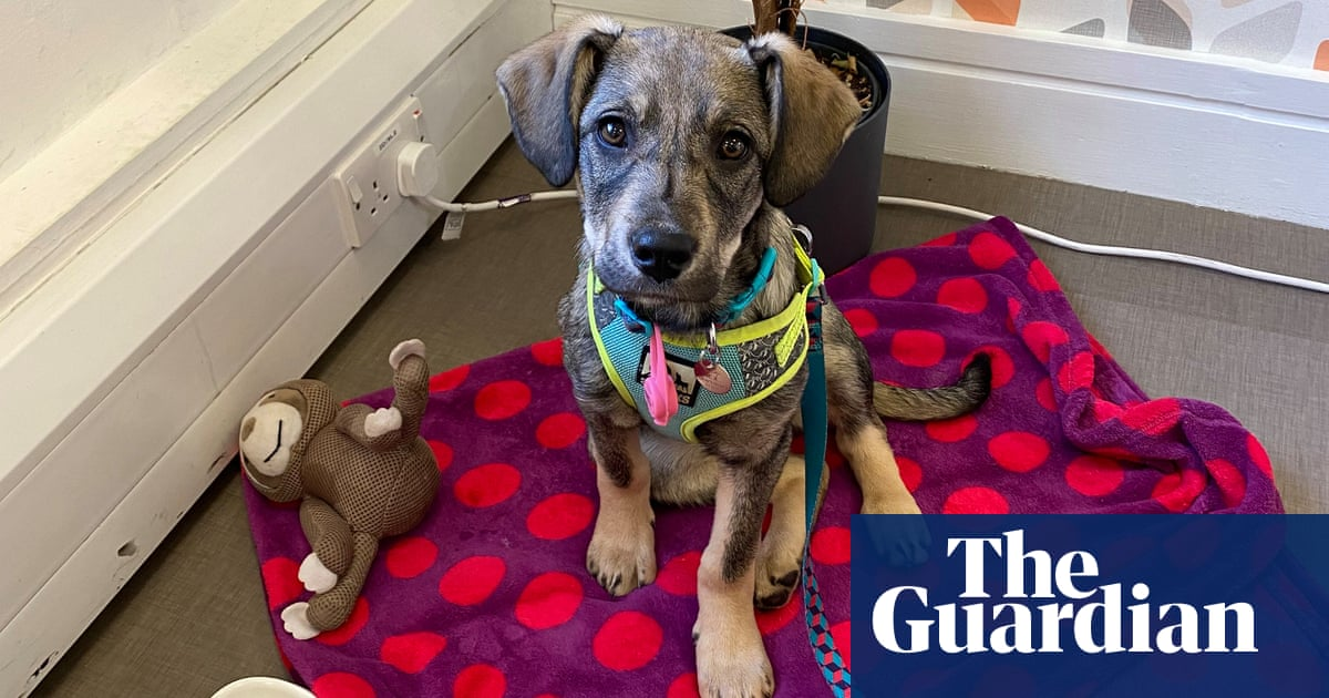 Many new dog owners in UK hope to bring pet into work as lockdown eases