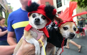 Pet owners Rochelle and Brian hold 'Lil Devil' Bitsy and 'Punk Rocker' Kibbles as pet owners take their dogs dressed in Halloween costumes for a walk in the Growl-a ween Parade through Old Town in Pasadena, California, a few days before Hallloween