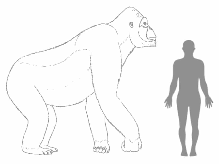 The Gigantopithecus, a giant gorilla that looks like King Kong, disappeared 100,000 years ago from the surface of the Earth due to the inability to adapt to environmental changes, according to scientists.