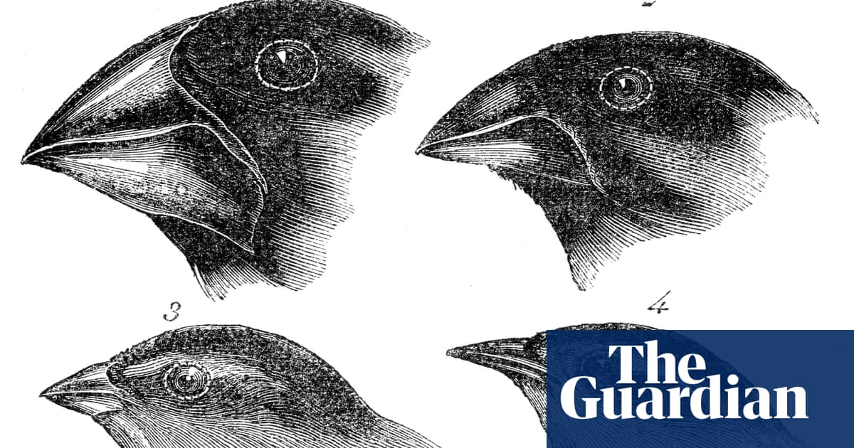Origin Of The Species Where Did Darwin S Finches Come From